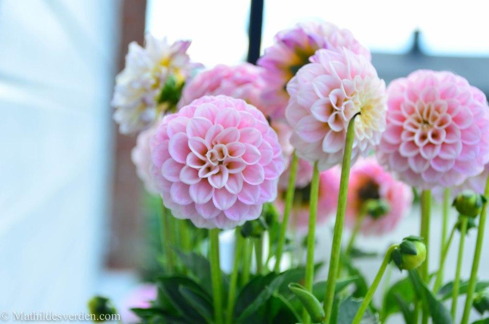 Blomst-2