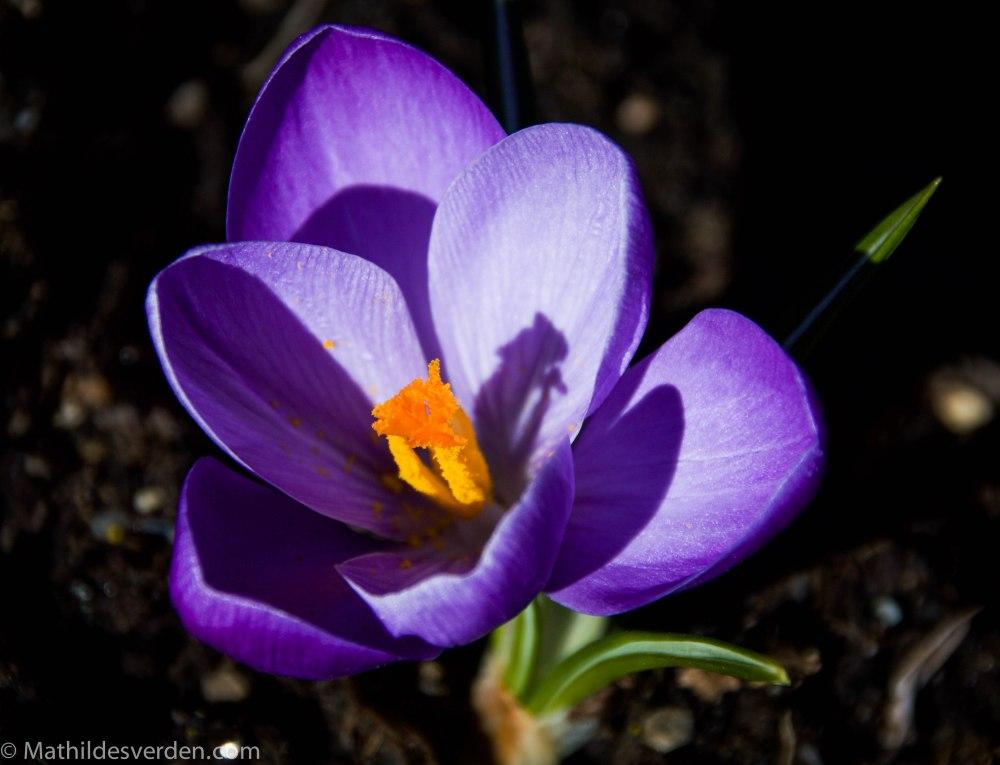 Blomst-3