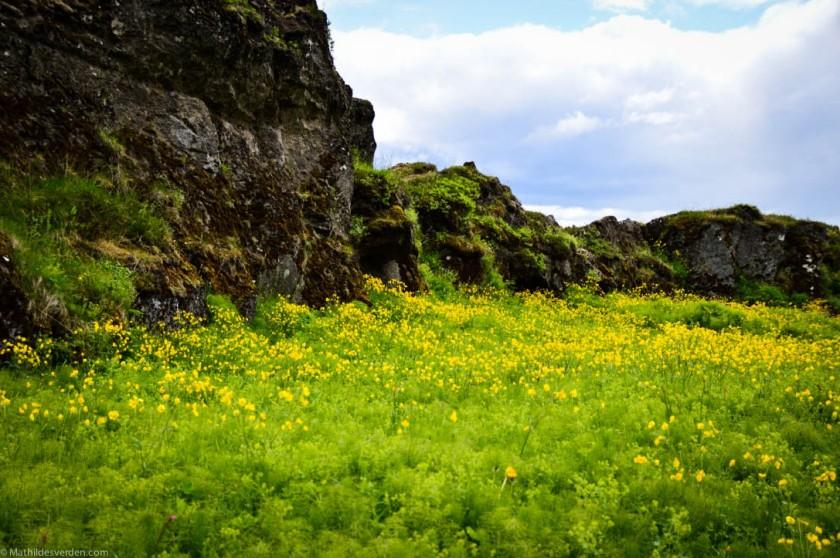 Icelandi-5