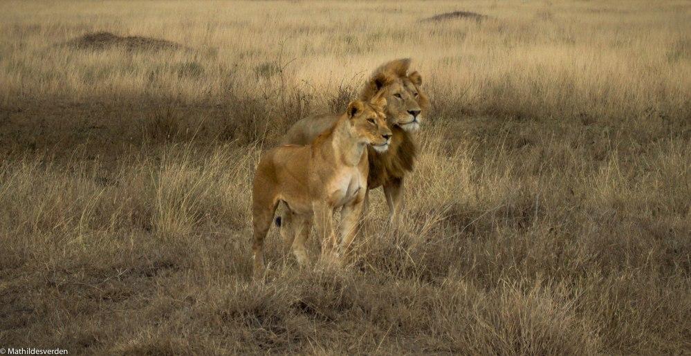 Safari-4