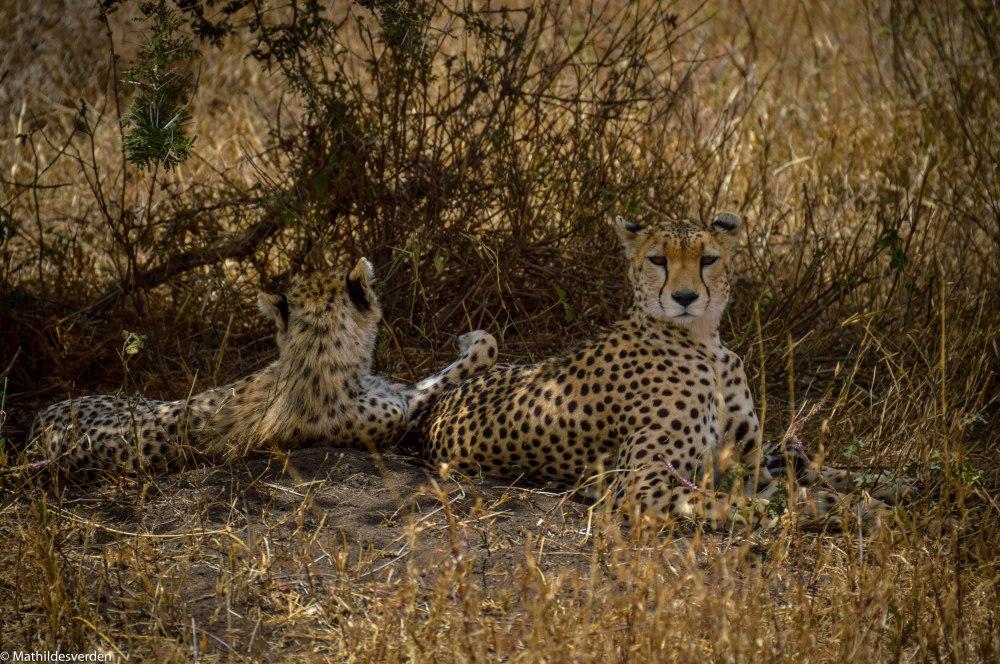 Safariiiii